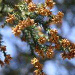 花粉症と風邪の違い